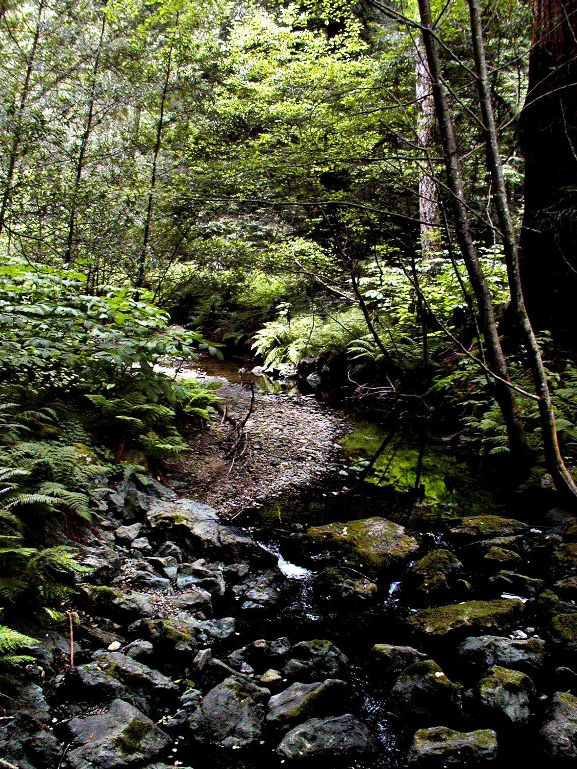 - A stream in the Muir Woods. - - Olympus C-2100UZ - Olympus C-2100 Ultra Zoom - Tony Karp, design, art, photography, techno-impressionist, techno-impressionism, aerial photography , drone , drones , dji , mavic pro , video , 3D printing - Books -