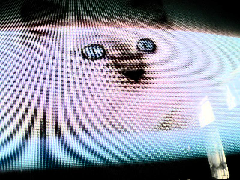 - This is a picture of a cat on the TV.. - Pictures taken by my granddaughter - - art  - photography - by Tony Karp