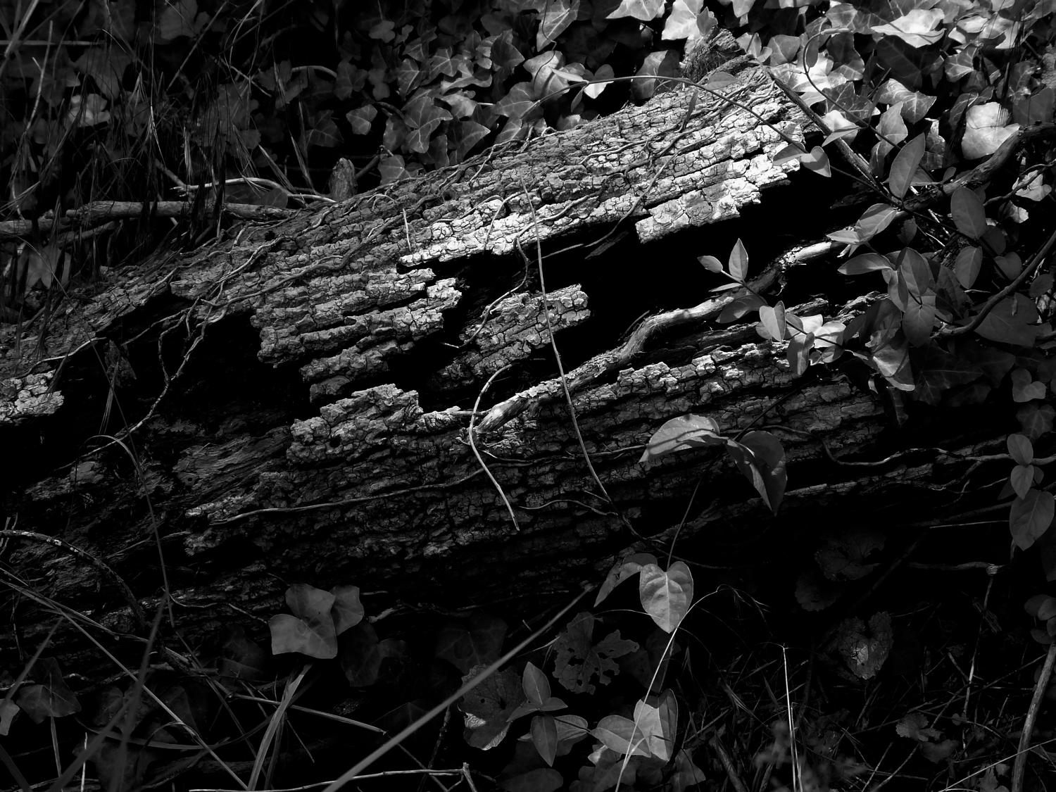 - Here's the old log in dynamic black and white - Panasonic DMC-FZ18 - Tony Karp, design, art, photography, techno-impressionist, techno-impressionism, aerial photography , drone , drones , dji , mavic pro , video , 3D printing - Books -