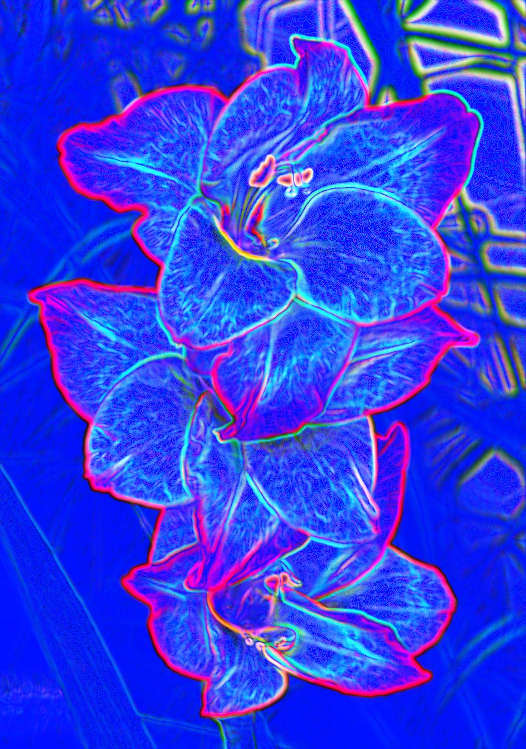 blue flowers - And some blue ones I thought you'd like. - - art  - photography - by Tony Karp