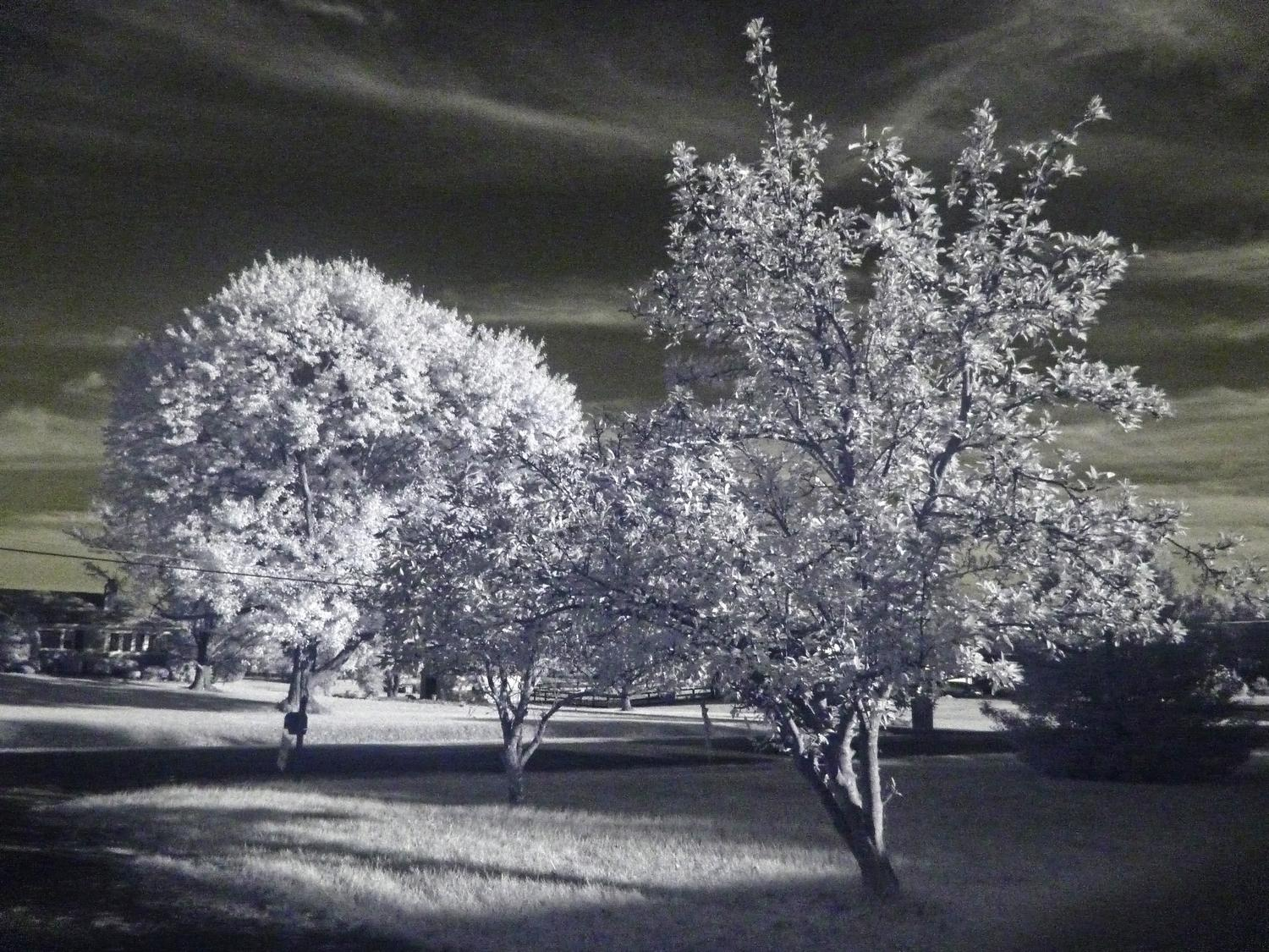 - Some trees in front of my house. 1/8 Sec, 800 ISO - infrared photography with the Panasonic DMC-FZ28 - Tony Karp, design, art, photography, techno-impressionist, techno-impressionism, aerial photography , drone , drones , dji , mavic pro , video , 3D printing - Books -