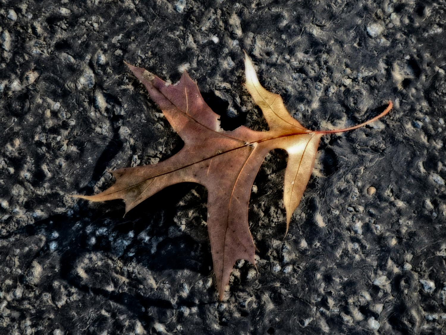 - A leaf on the road <br>--- Click to see ORIGINAL --- -  Panasonic DMC-FZ150 - Tony Karp, design, art, photography, techno-impressionist, techno-impressionism, aerial photography , drone , drones , dji , mavic pro , video , 3D printing - Books -