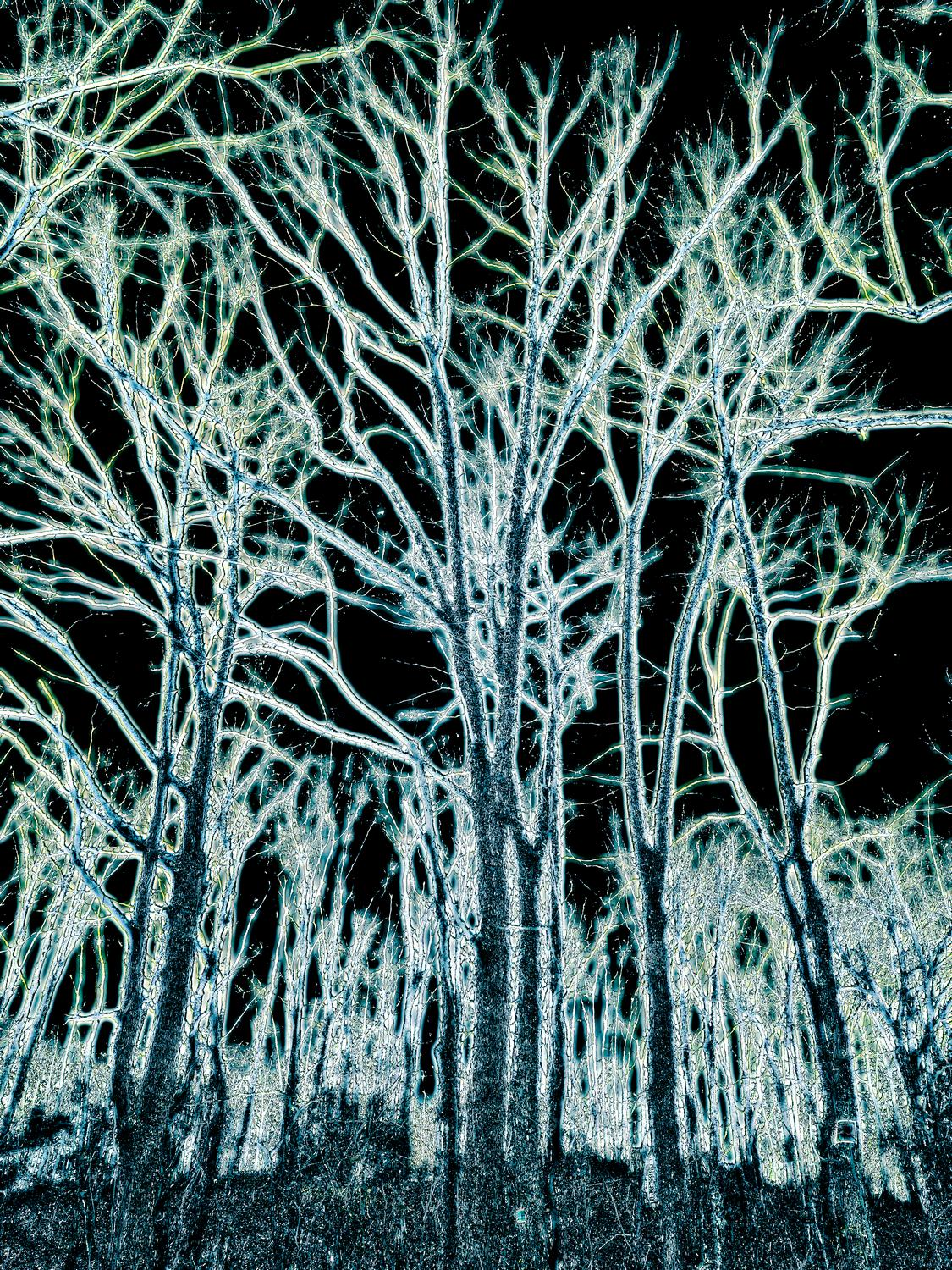 - The dreams of winter trees <br>--- Click to see ORIGINAL --- - -  Panasonic DMC-FZ150 - - Tony Karp, design, art, photography, techno-impressionist, techno-impressionism, aerial photography , drone , drones , dji , mavic pro , video , 3D printing - Books -