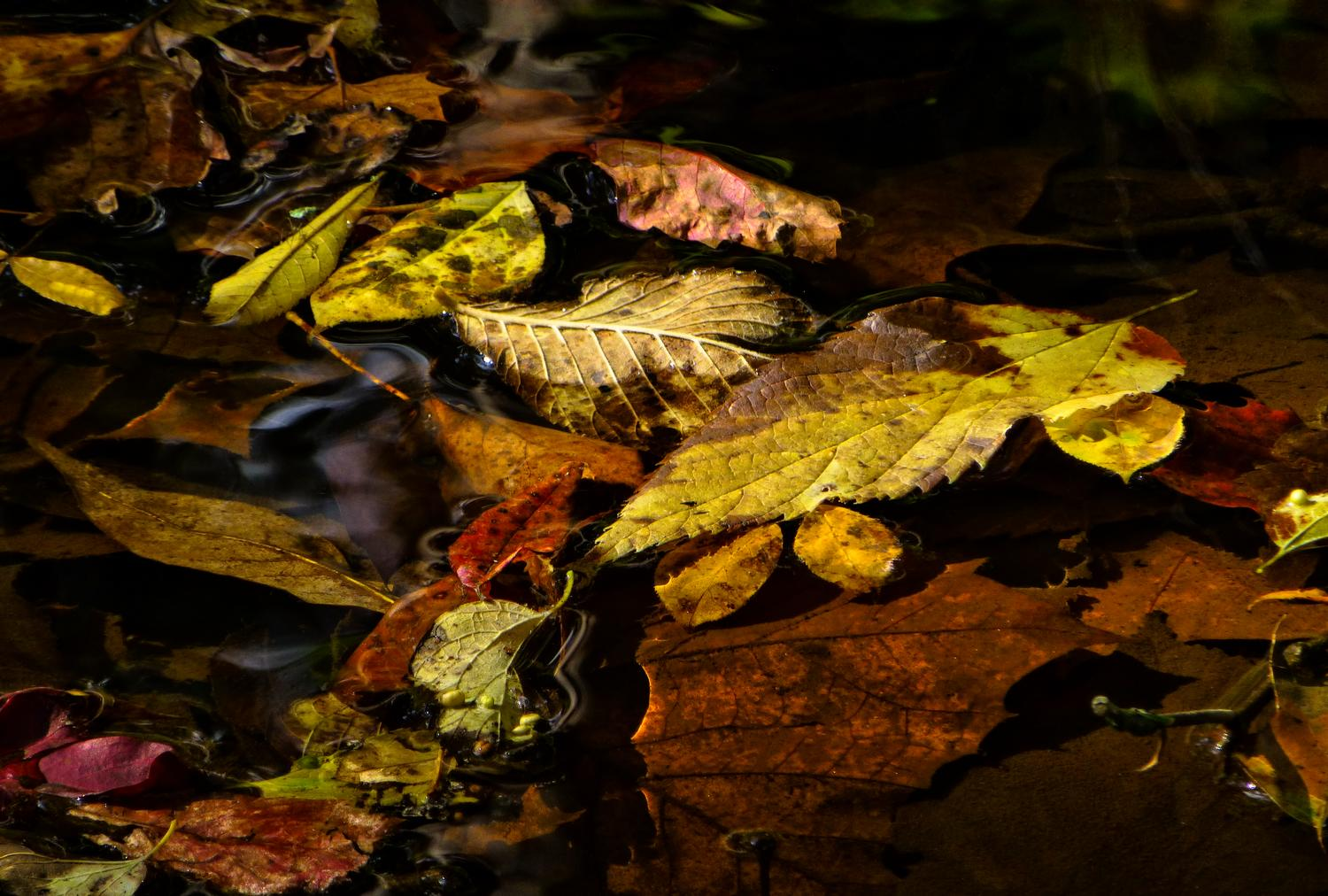 - More autumn leaves<br>--- Click to see ORIGINAL --- - Panasonic DMC-ZS20 - - art  - photography - by Tony Karp