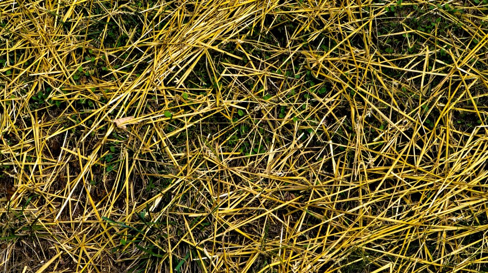 - Straw covering new grass <br>--- Click to see ORIGINAL --- - Panasonic DMC-ZS20 - Tony Karp, design, art, photography, techno-impressionist, techno-impressionism, aerial photography , drone , drones , dji , mavic pro , video , 3D printing - Books -