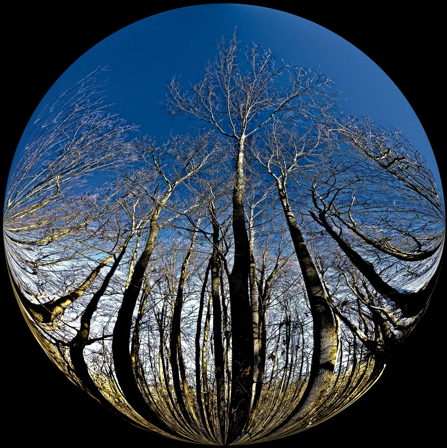 - The trees in our neighborhood exist in a bubble -  Tony Karp's Bubble Pictures - From 1959 to 2013 - Tony Karp, design, art, photography, techno-impressionist, techno-impressionism, aerial photography , drone , drones , dji , mavic pro , video , 3D printing - Books -