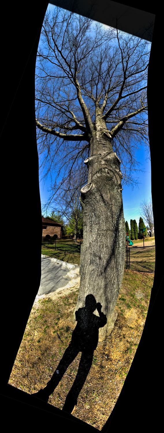 - Twisty-tree self-portrait panorama.  - Panasonic DMC-ZS40 - Panasonic DMC-TZ60 - - Tony Karp, design, art, photography, techno-impressionist, techno-impressionism, aerial photography , drone , drones , dji , mavic pro , video , 3D printing - Books -