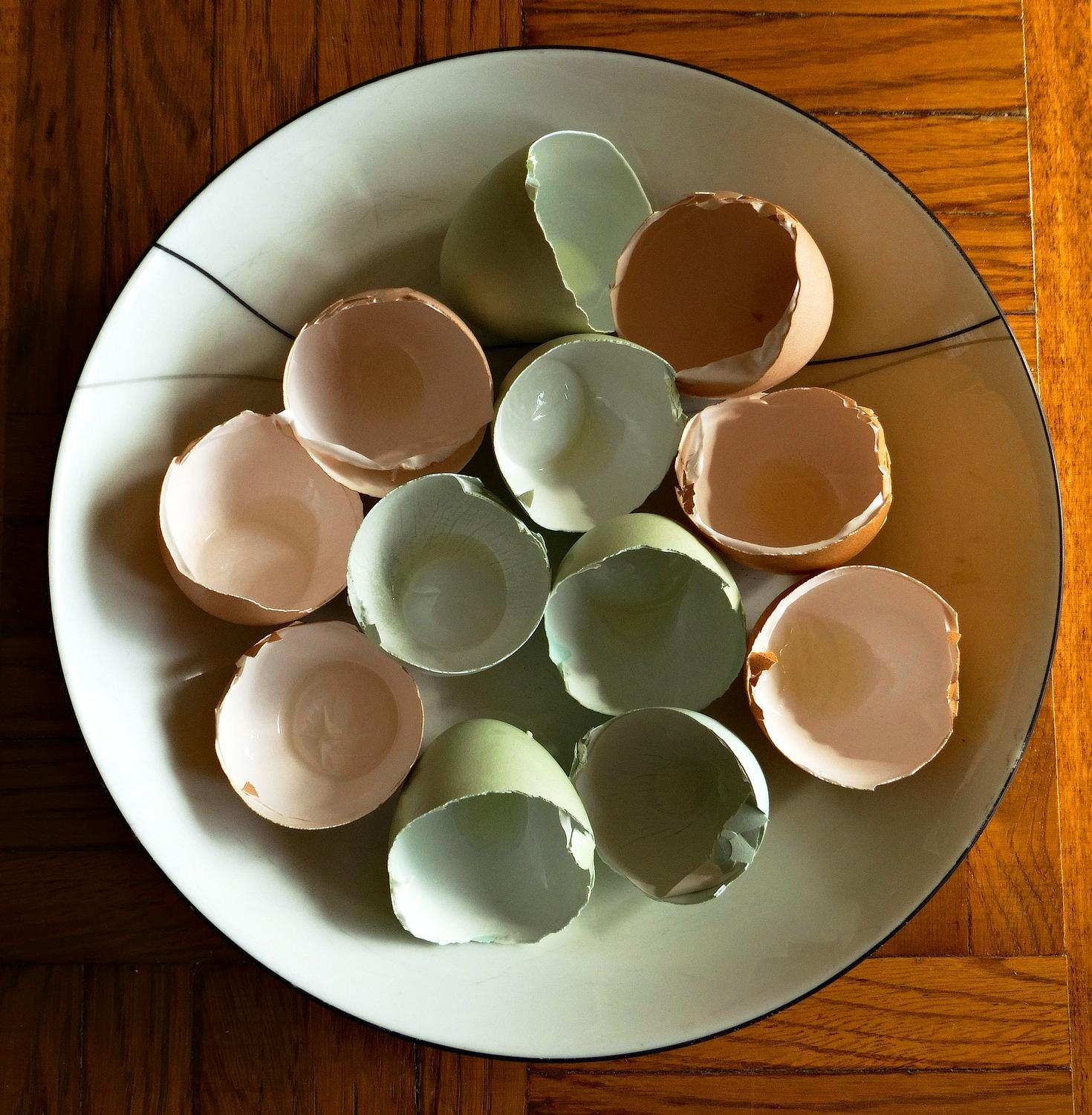 - Beautiful, multi-colored eggshells. - Mark and Lana -- Chickens -- Eggs -- eggshells -- green eggs and ham - - Tony Karp, design, art, photography, techno-impressionist, techno-impressionism, aerial photography , drone , drones , dji , mavic pro , video , 3D printing - Books -